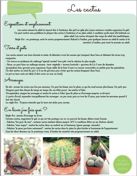 comment cultiver des cactus