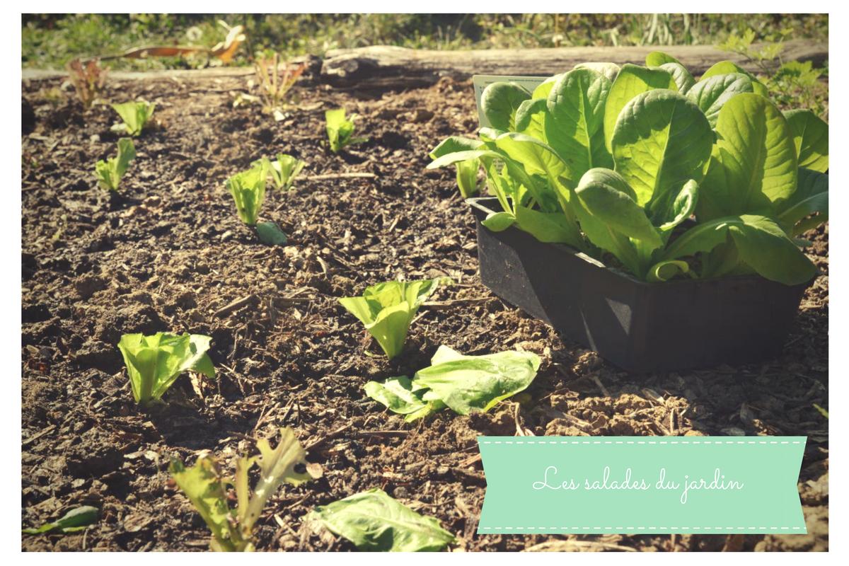 Les petites salades du jardin