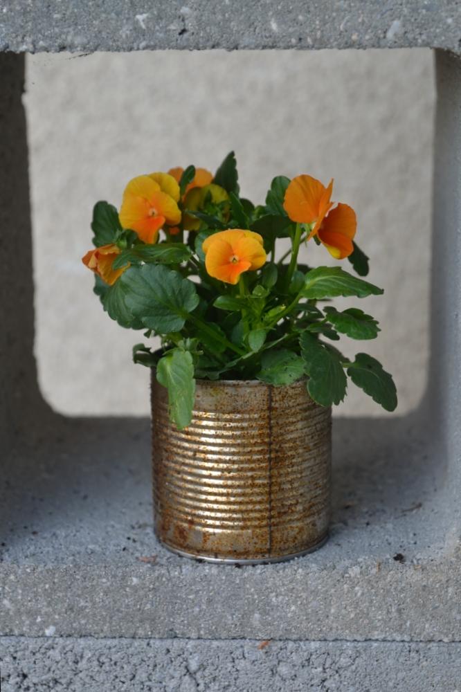 récup : boite de conserve utilisée comme pot de fleur
