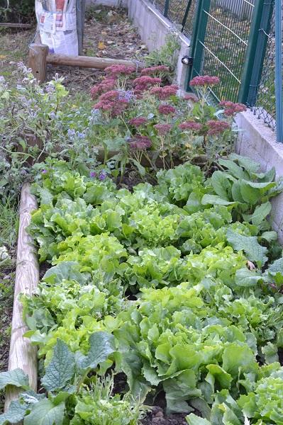 mon avis sur mon petit jardin en permaculture de joseph chauffrey ed terre vivante un. Black Bedroom Furniture Sets. Home Design Ideas