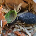 jardinage et zéro déchet : le compostage