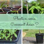 graines plants choisir