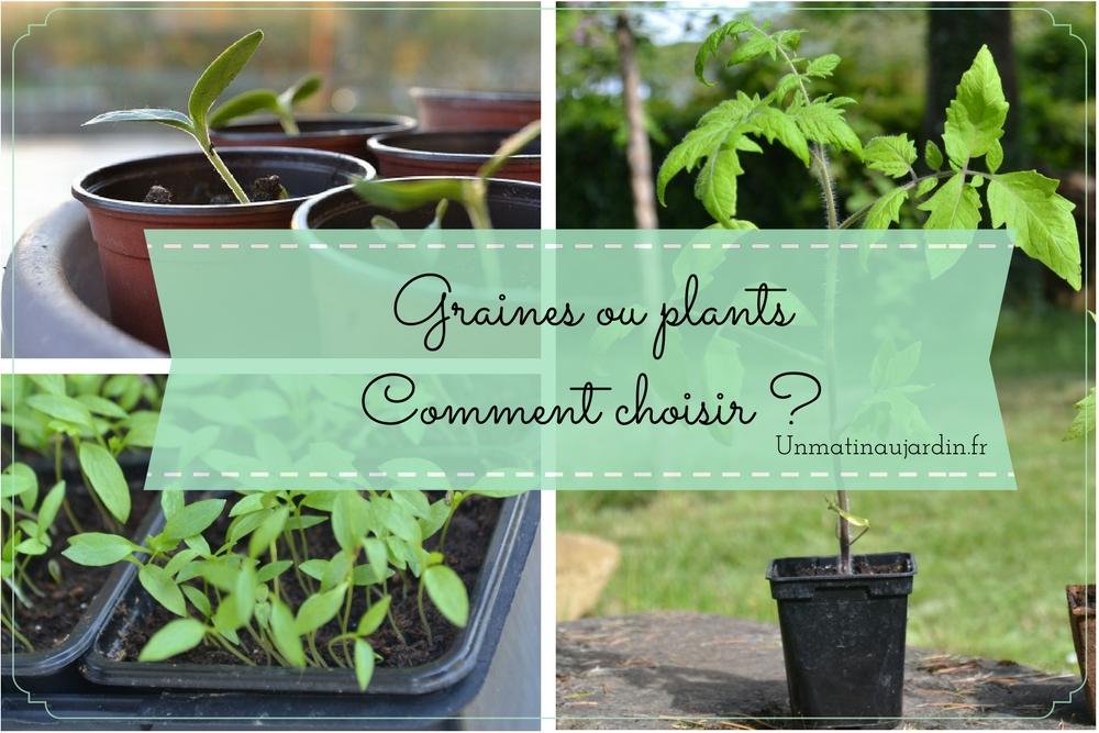 illustration de l'article Graines ou plants comment choisir