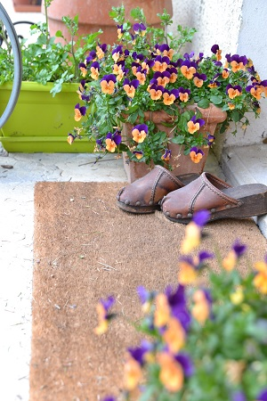 des fleurs de l automne au printemps que sont devenues les pens es un matin au jardin. Black Bedroom Furniture Sets. Home Design Ideas