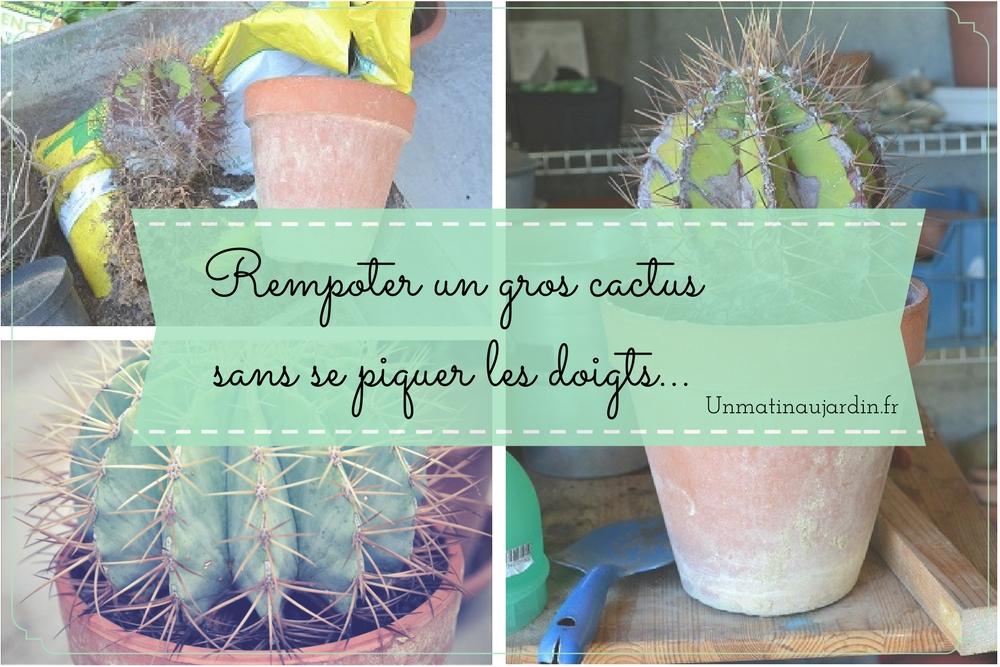 Comment rempoter un GROS cactus ? (sans se piquer les doigts…)