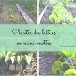 Article planter des laitues en mini-motte