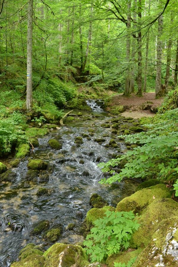 balade en forêt et ruisseau