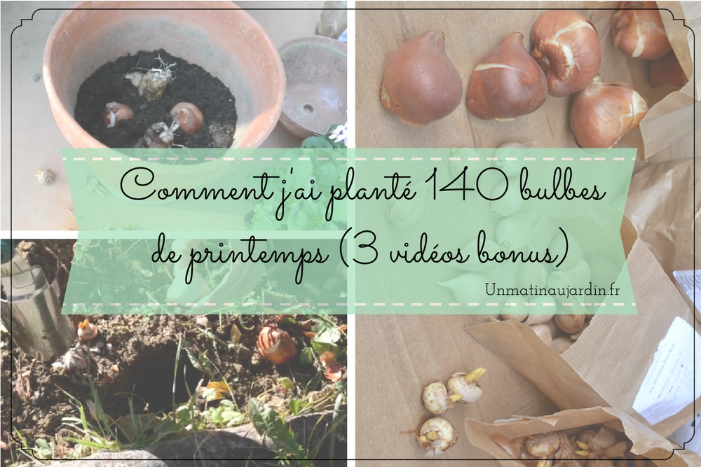 Comment j'ai planté 140 bulbes de printemps