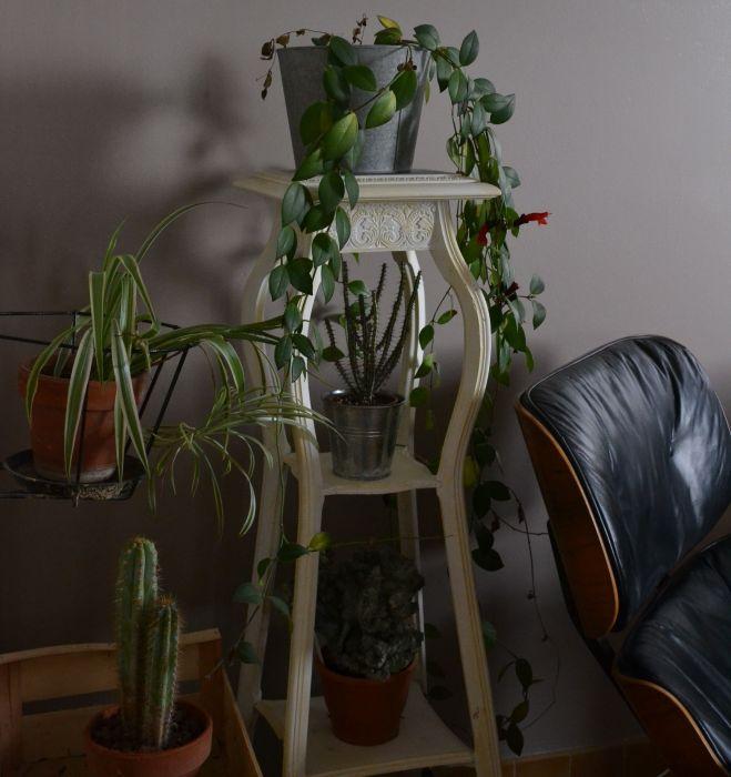 ma petite jungle d'intérieur en hiver