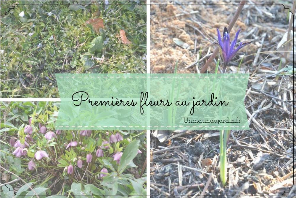 Premières floraisons de fin d'hiver et début printemps