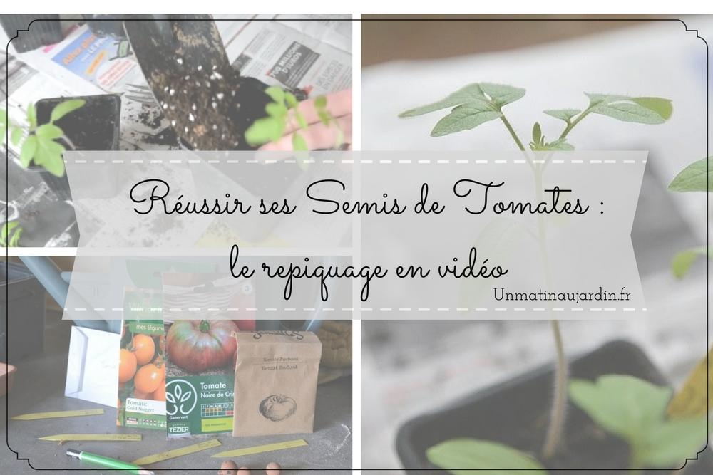 Réussir ses semis de tomates : le repiquage expliqué en vidéo