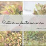 comment cultiver ses plantes carnivores