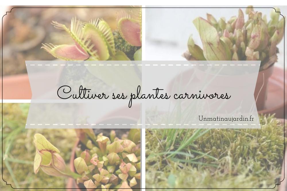Plantes carnivores et Mimosa Pudica : quand on va à la jardinerie avec ses enfants…