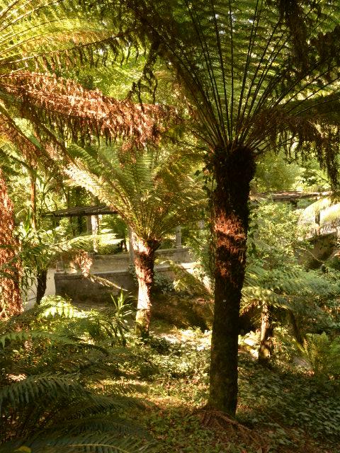 Les fougères du Parque da Pena