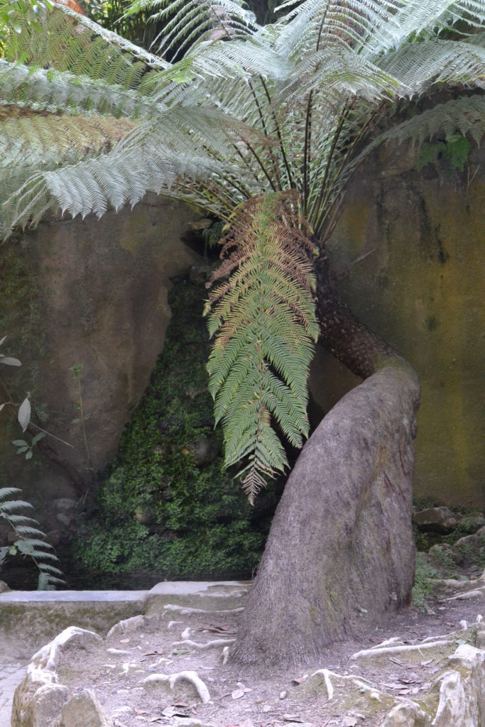 une fougère arborescentee au tronc tortueux