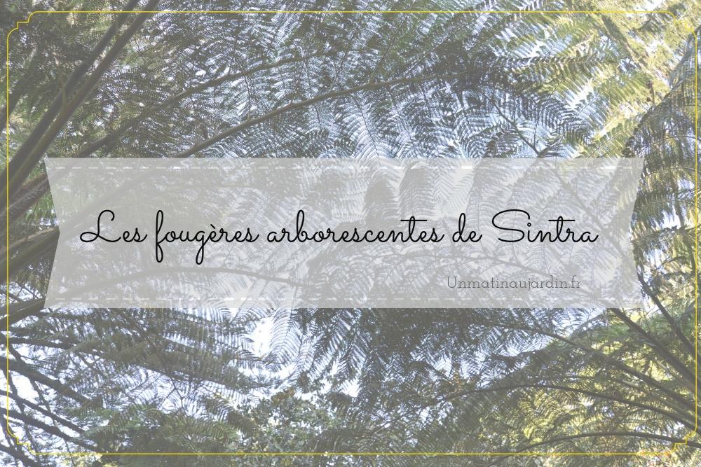 Une comtesse et des fougères : visite du Palacio et Parque da Pena à Sintra (Portugal)
