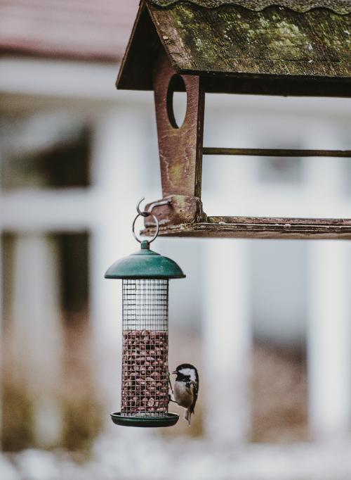 mangeoire à oiseaux pour cacahettes ou tournesol
