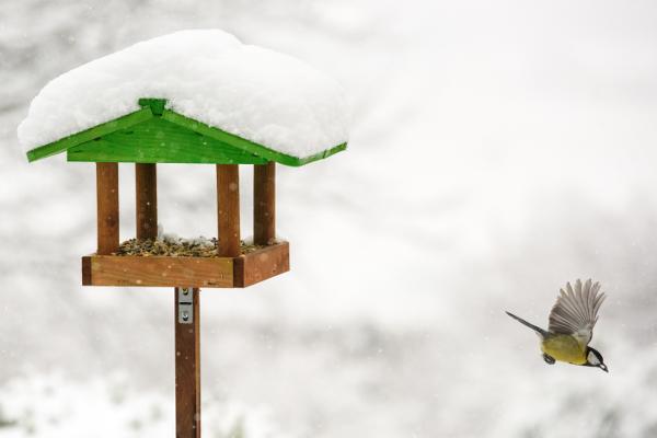 mangeoire à oiseaux sous la neige