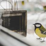 on peut installer la mangeoire près d'une fenêtre pour observer les oiseaux facilement