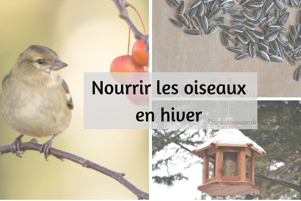 Comment et pourquoi nourrir les oiseaux au jardin ?
