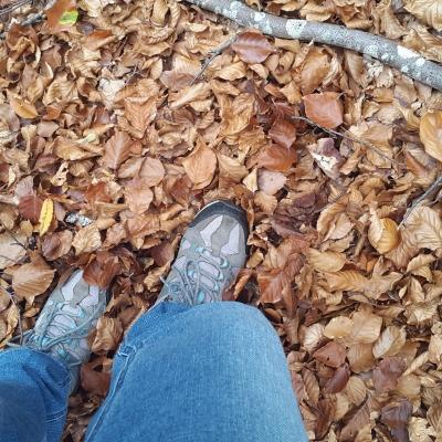 des chaussures de marche pour randonner en forêt