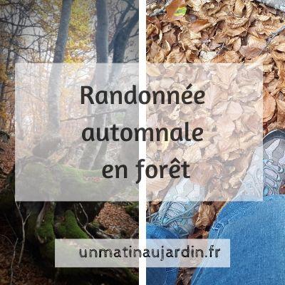plaisir de l'automne au naturel : la randonnée en forêt