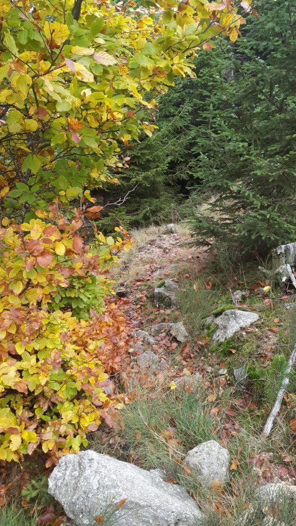 chemin de randonne en forêt en automne