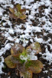 unmatinaujardin-que-faire-au-jardin-en-hiver
