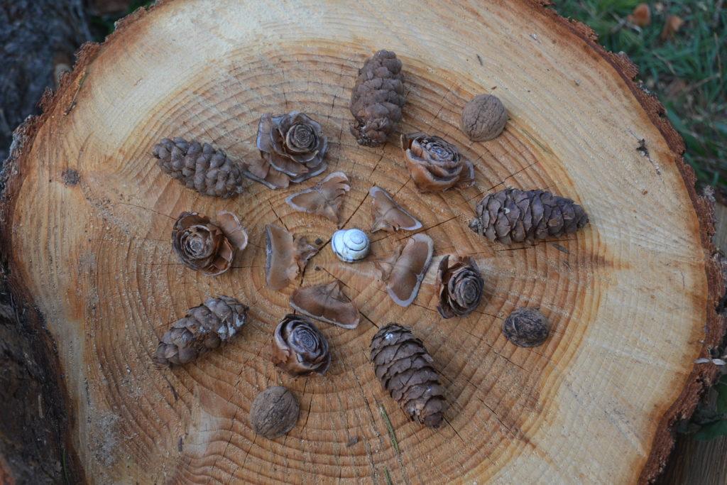 Land art avec pomme de pin et coquilles