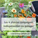 4 plantes compagnes indispensables au potager bio. Les meilleures associations de cultures fleurs et légumes.