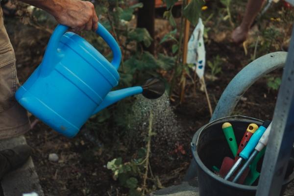 Arroser son potager : avec un arrosoir ou un tuyau ?