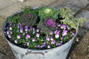fleurs-pour-automne-et-hiver