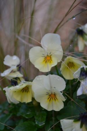 fleurs-pour-automne-hiver