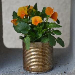 fleur dans boite de conserve