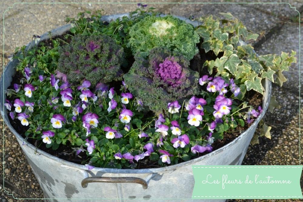 fleurs-pour-lautomne